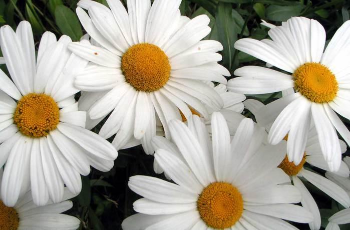 Почему ландыши в букетах губят многие растения, купить оптом цветы живые в екатеринбург